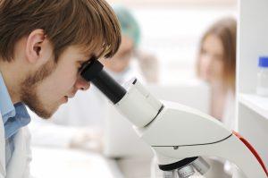 顕微鏡で調べる
