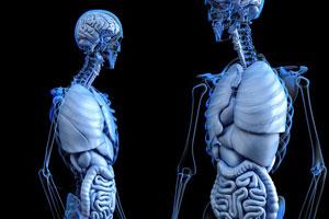 肝臓への負担
